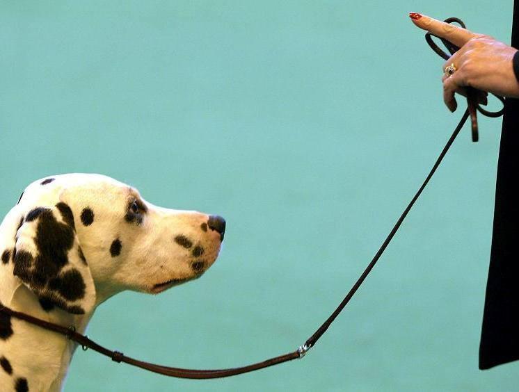 Educazione cinofilia siamo sicuri che sia eticamente for Educazione cane