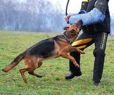 addestramento cani bologna – cerchi un addestratore cani in
